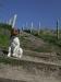 English bulldog x Fox terrier