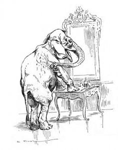pix Elephant consciousness