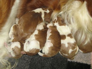 New_born_pups