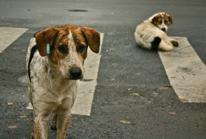 Street dogs can come with a heavy past